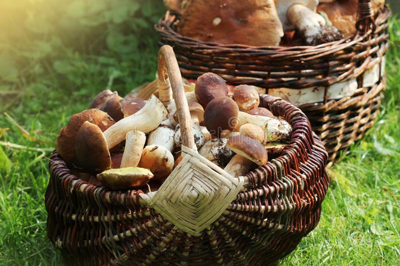 世纪智慧农业科技公司招聘采菇工